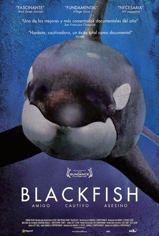 Blackfish (2013) Main Poster