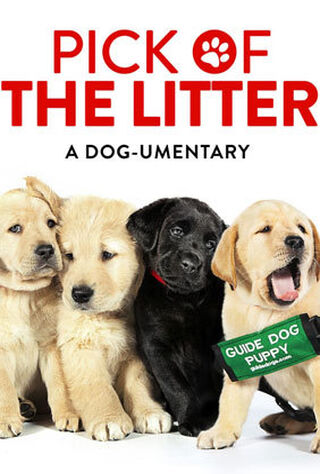 Pick Of The Litter (2018) Main Poster