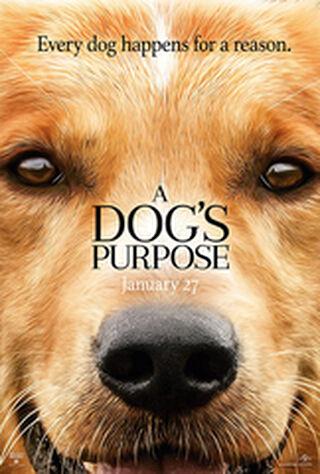 A Dog's Purpose (2017) Main Poster
